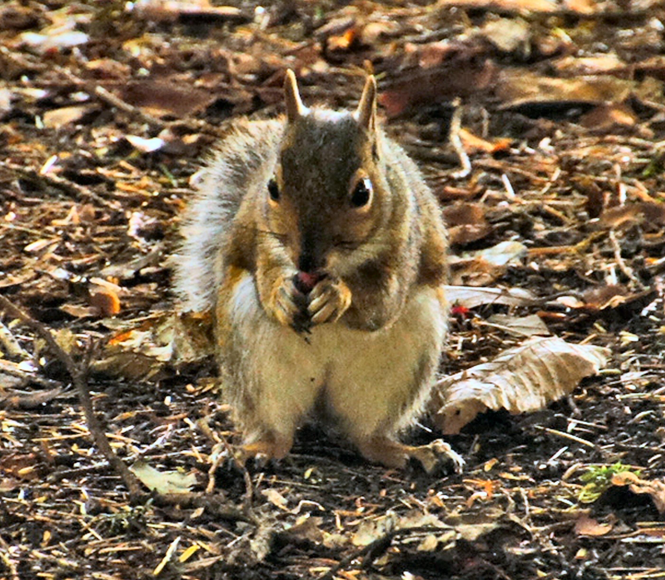 Squirrels14-07-11--14072011027-sized