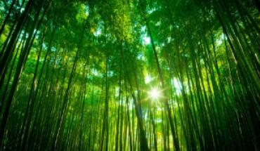 alberiweb