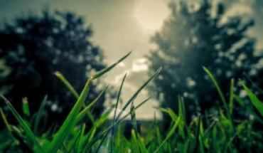 landscape-nature-sunset-trees-web
